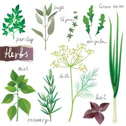 Weight Loss Herbs for a Slimmer You